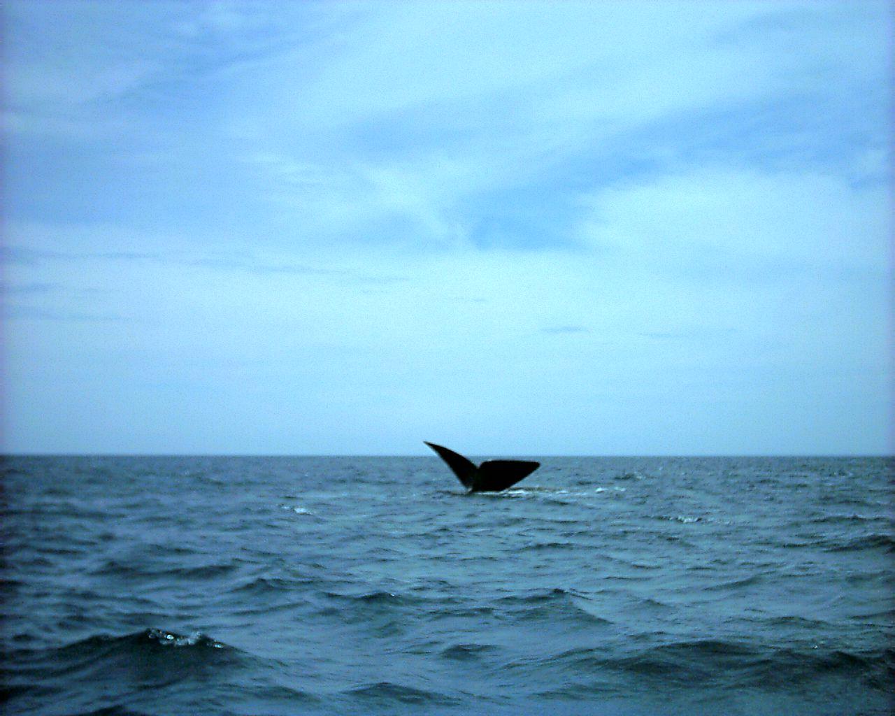 whaletail.jpg